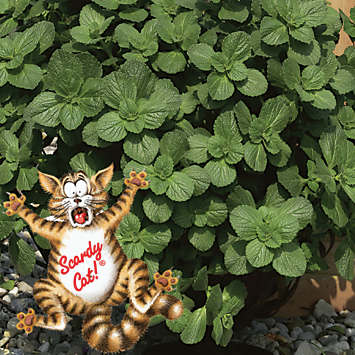 Anti Cat Plants Uk